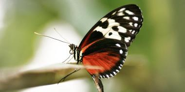 Пеперуда, кацнала на клон