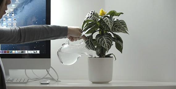 Oseba sedi poleg zaslona in zaliva rastlino